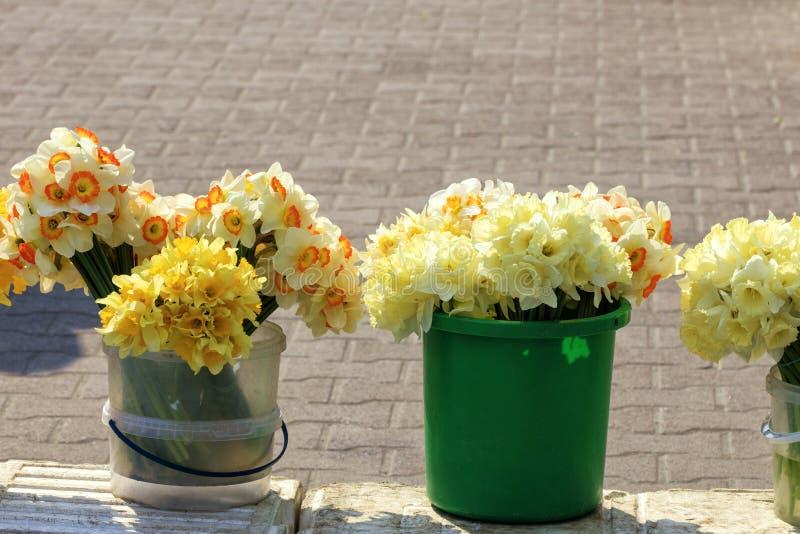 Os ramalhetes de narcisos amarelos amarelos de vários tipos são vendidos no mercado de umas cubetas plásticas fotos de stock royalty free