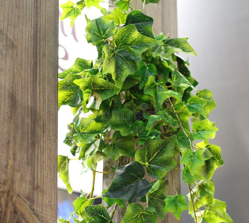 Os ramos artificiais das folhas penduram em uma parede de madeira Muitas folhas nos ramos fotografia de stock royalty free