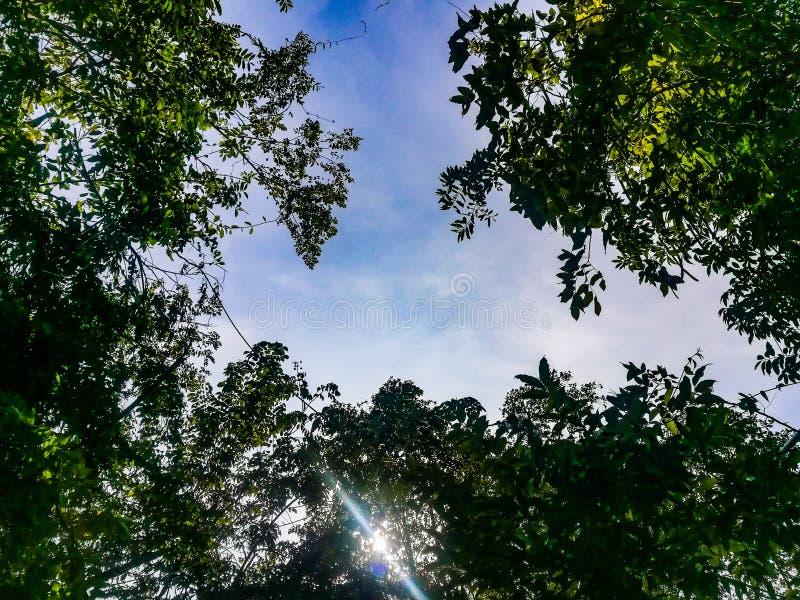 Os ramos da árvore imagem de stock