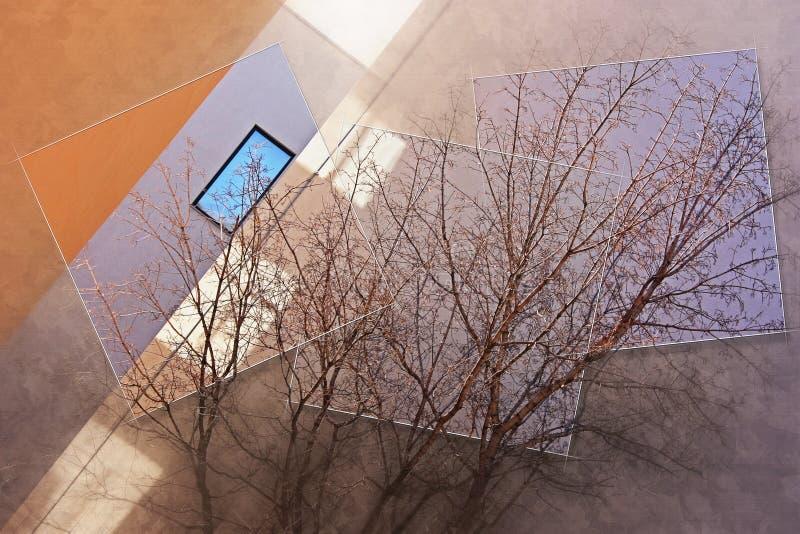 Os ramos da árvore contra a construção foto de stock royalty free