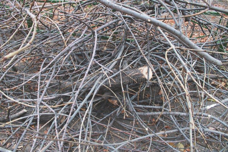 Os ramos de árvore abatidos, felling, abateram ramos de árvore no campo, desflorestamento imagens de stock royalty free