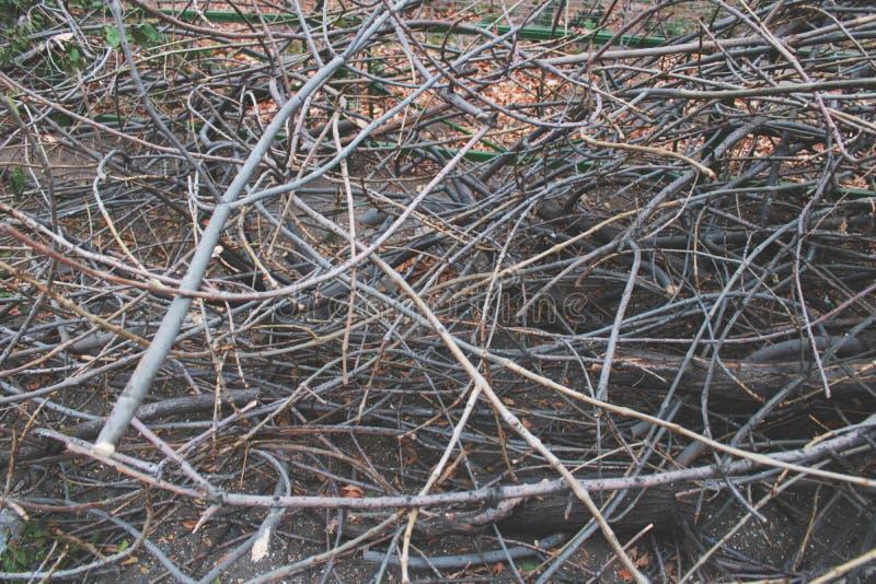 Os ramos de árvore abatidos, felling, abateram ramos de árvore no campo, desflorestamento imagem de stock