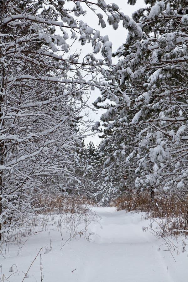 Os ramos de árvore dobram-se sob a carga pesada da neve fresca fotografia de stock royalty free