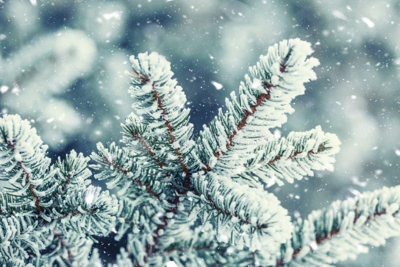 Os ramos de pinheiro cobriram a geada na atmosfera nevado imagem de stock royalty free