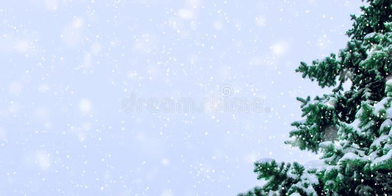 Os ramos de um abeto vermelho bonito da floresta cobriram com a neve fresca imagens de stock royalty free