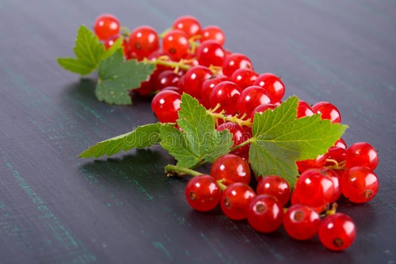 Os ramos de um corinto maduro vermelho encontram-se em um fundo preto fotografia de stock