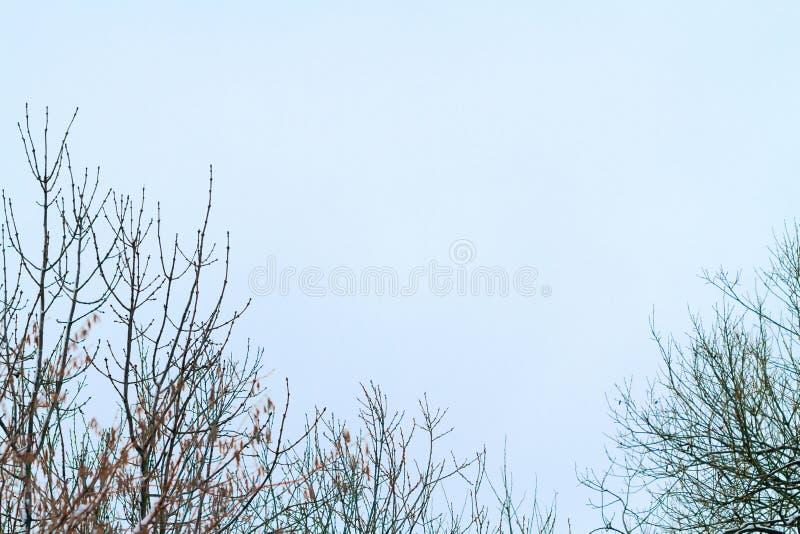 Os ramos na neve foto de stock royalty free