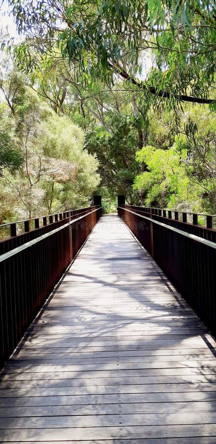 os reis estacionam e jardim botânico em Perth fotos de stock