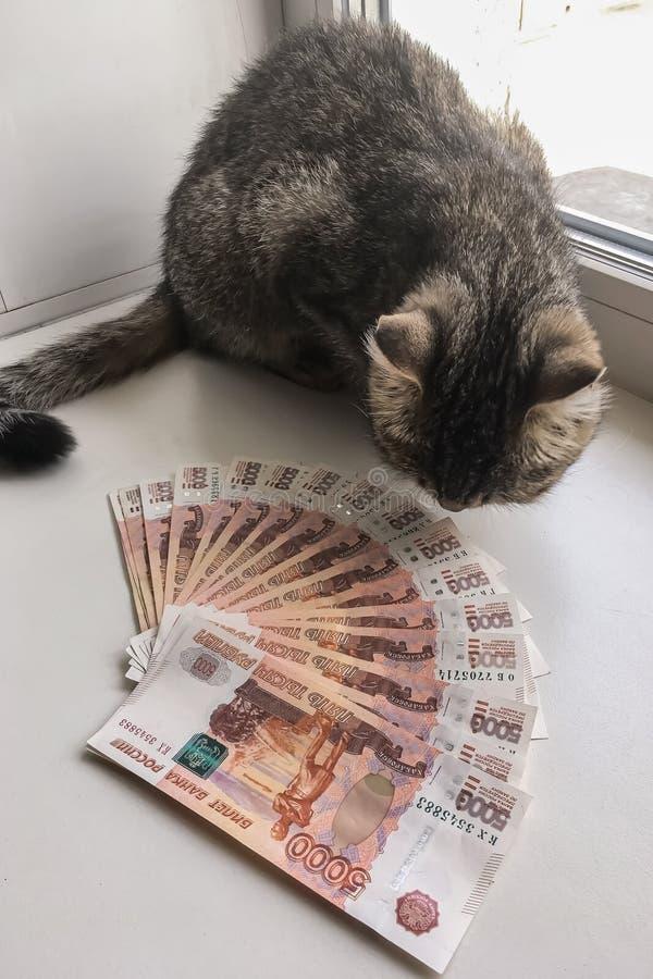 Os rublos de russo estão em um fundo homogêneo, contas cinco mil rublos, fã do dinheiro e perto do gato imagens de stock