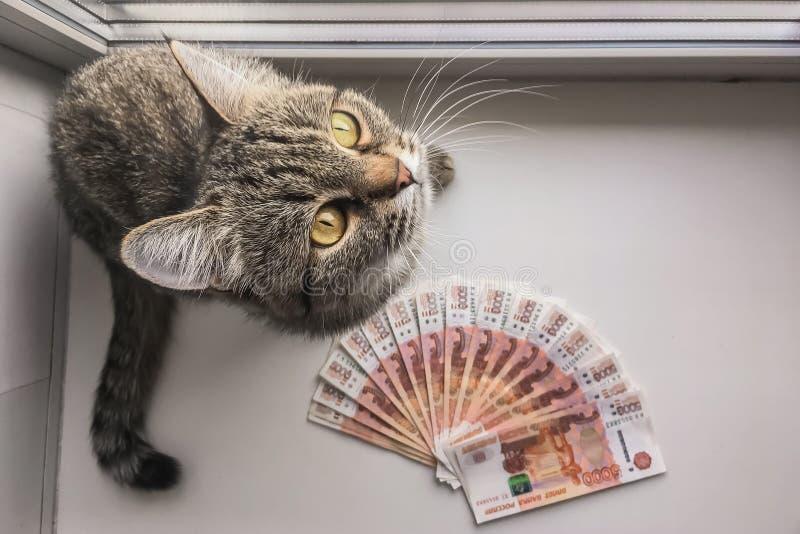 Os rublos de russo estão em um fundo homogêneo, contas cinco mil rublos, fã do dinheiro e perto do gato foto de stock royalty free