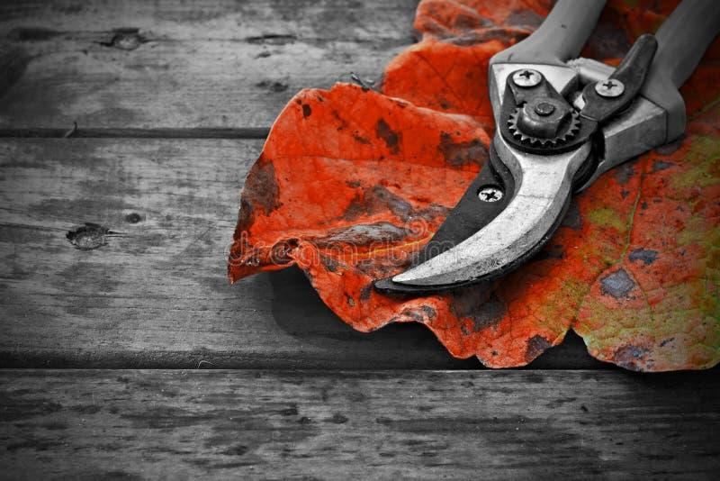 Os Secateurs e o outono folheiam na tabela de madeira rústica imagem de stock royalty free