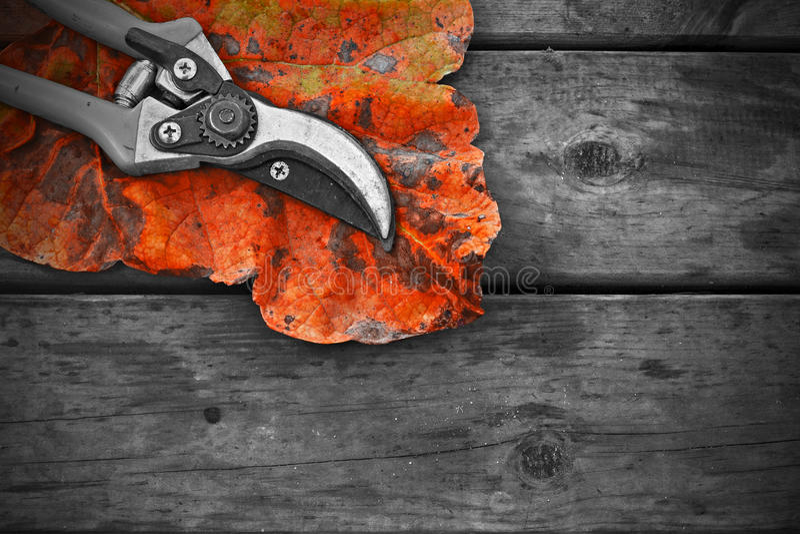 Os Secateurs e o outono folheiam na tabela de madeira rústica fotos de stock royalty free