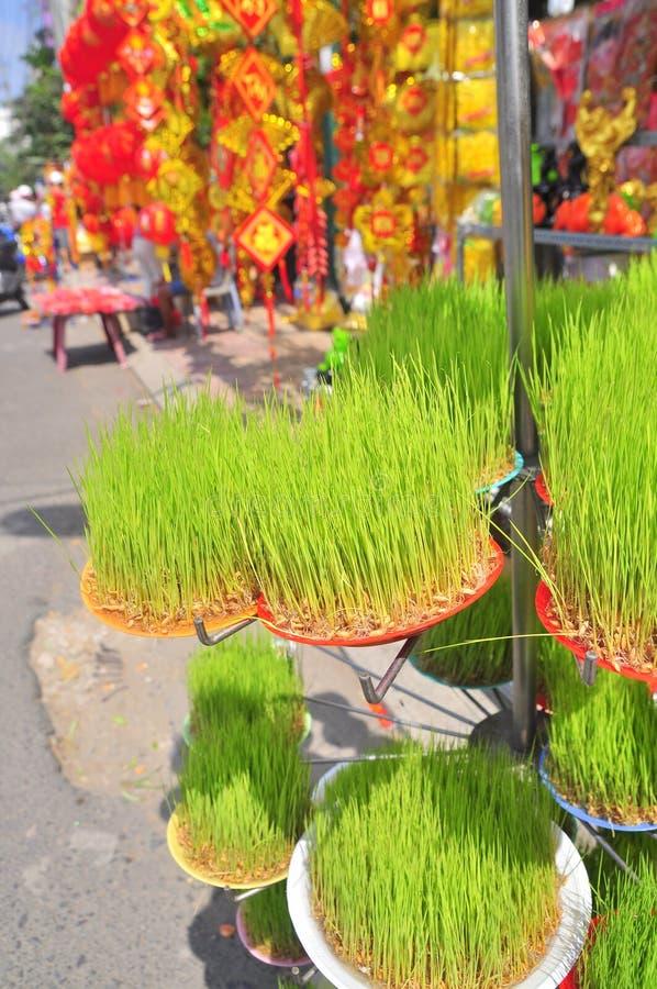 Os seedings afortunados do arroz são para a venda na rua no ano novo lunar vietnamiano tradicional fotos de stock