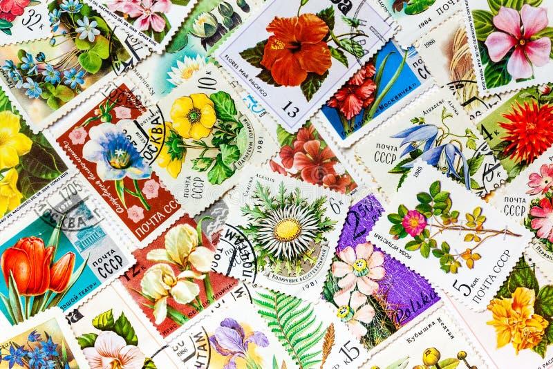 Os selos impressos em URSS mostram flores imagem de stock royalty free