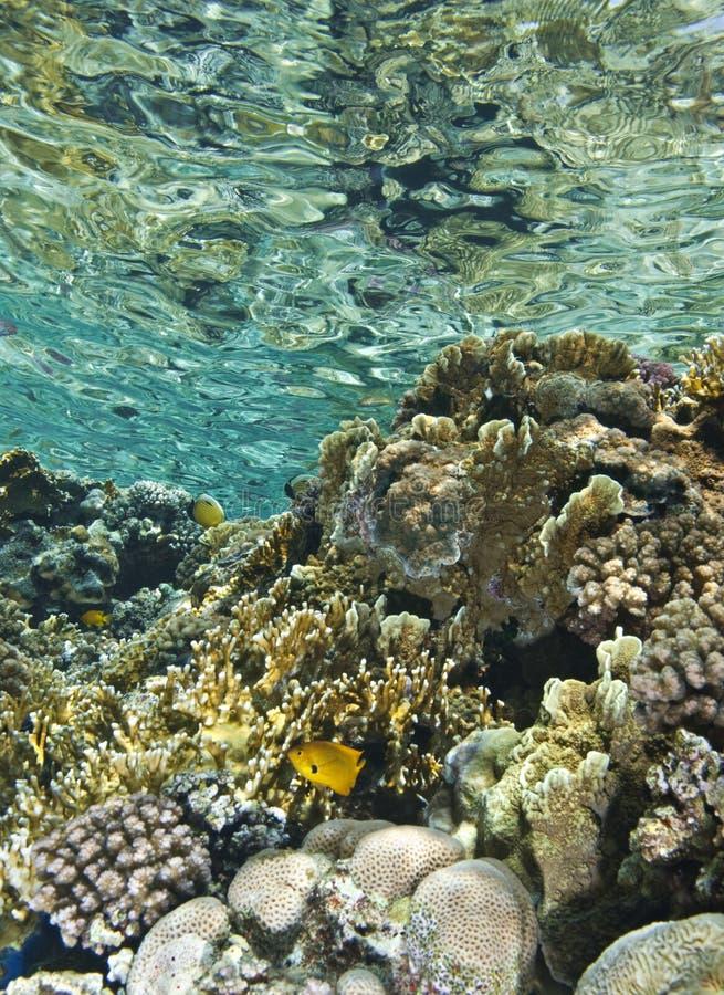 Os shallows de um recife coral tropical. fotografia de stock royalty free