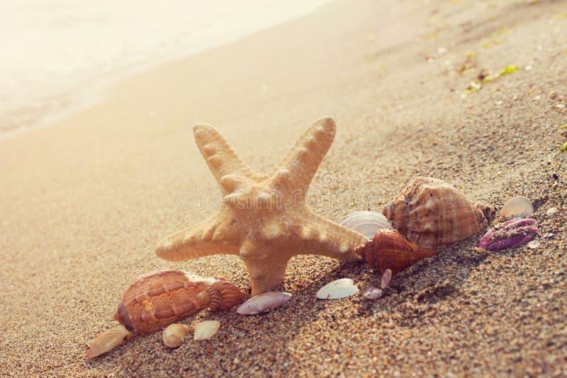 Os shell sortidos e a estrela do mar do mar em um oceano sul costeiam com fotos de stock royalty free