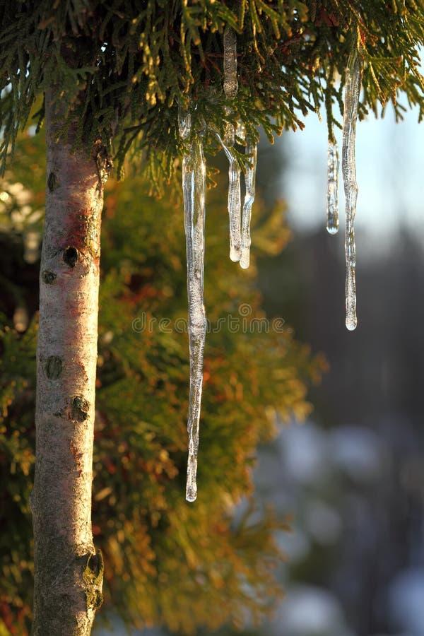 Download Icicles.Spring. imagem de stock. Imagem de água, geada - 29835401