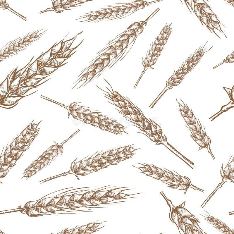 Os spikelets do cereal do trigo, vector o teste padrão sem emenda Ilustração tirada mão do esboço Fundo do pacote da padaria e da ilustração stock