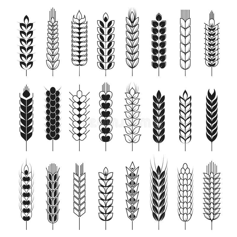 Os Spikelets ou do trigo ou do centeio do cereal vetor das orelhas isolaram os ícones ajustados ilustração stock