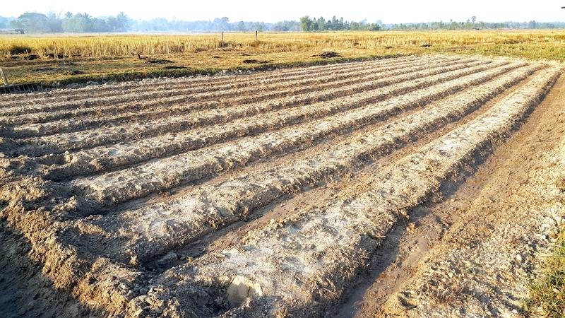 Os sulco enfileiram o teste padrão dos campos agrícolas arados preparados para p imagem de stock royalty free