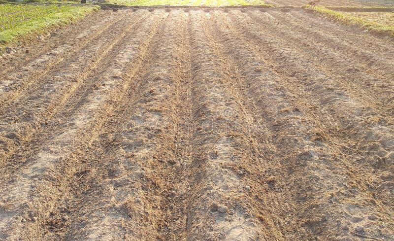 Os sulco enfileiram o teste padrão dos campos agrícolas arados preparados para p fotos de stock