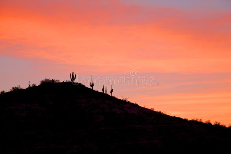 Nascer do sol do deserto de Sonoran imagem de stock