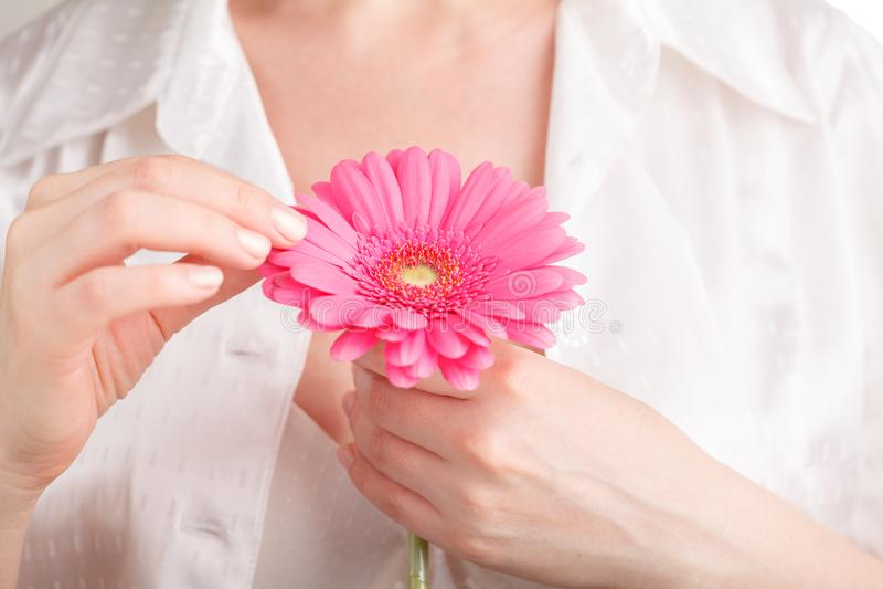 Os termas e o corpo importam-se o conceito, gerbera cor-de-rosa na mão fêmea imagem de stock