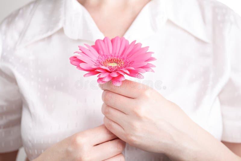 Os termas e o corpo importam-se o conceito, gerbera cor-de-rosa na mão fêmea foto de stock royalty free