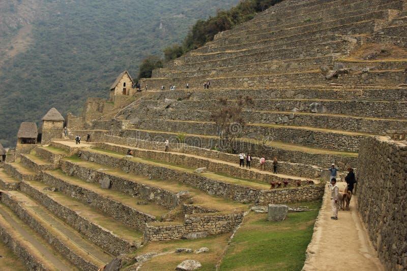 Os terraços mergulhados em Machu Picchu imagens de stock royalty free