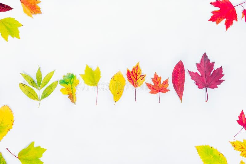 Os tipos diferentes da vista superior de queda da árvore deixam em seguido o inclinação do verde a escuro - vermelho no fundo bra foto de stock royalty free
