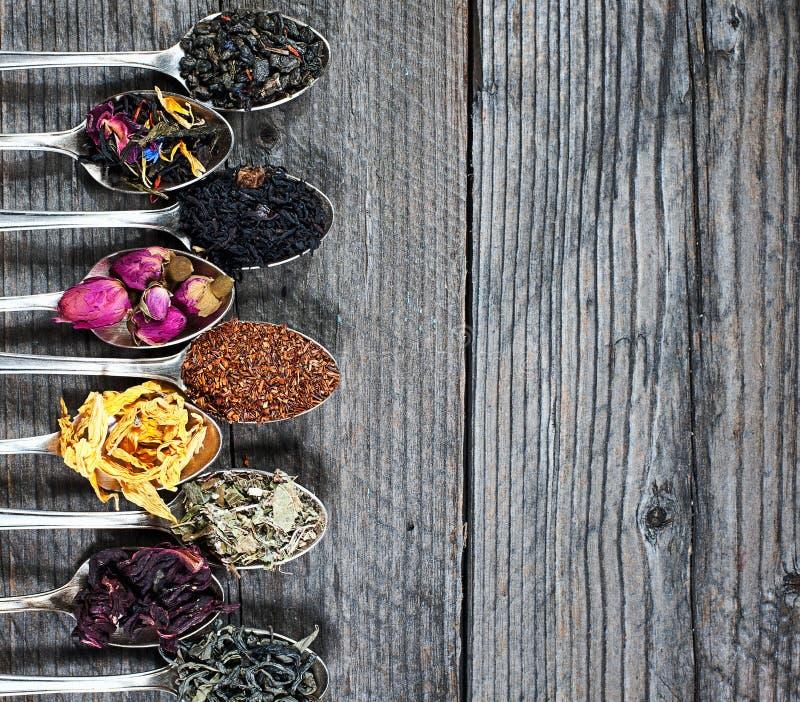 Os tipos diferentes do chá apresentados como uma amostra nas colheres de prata, vista superior imagem de stock royalty free