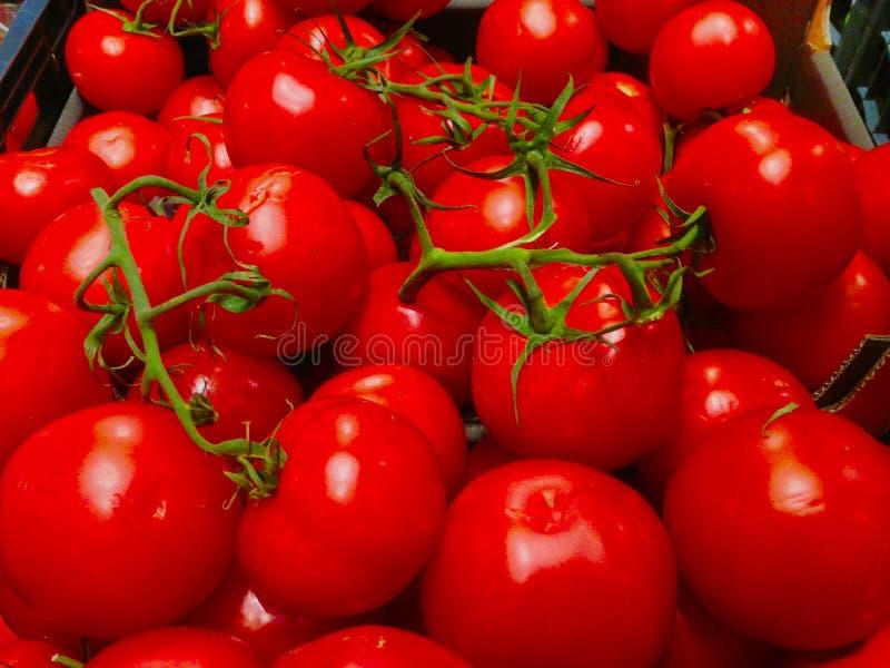 Os tomates da caixa apenas preencheram o supermercado fotos de stock