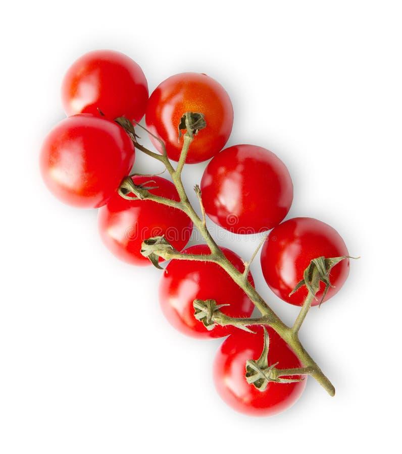 Os tomates de cereja vermelhos maduros ramificam isolado no fundo branco foto de stock royalty free