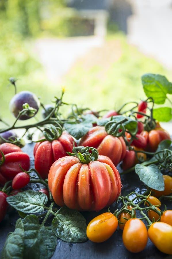 Os tomates orgânicos crus frescos diferentes colhem do jardim no fundo da natureza imagens de stock royalty free