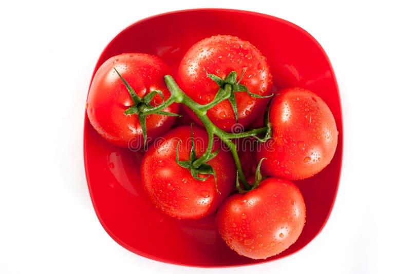 Os tomates vermelhos maduros com água deixam cair sobre o branco foto de stock
