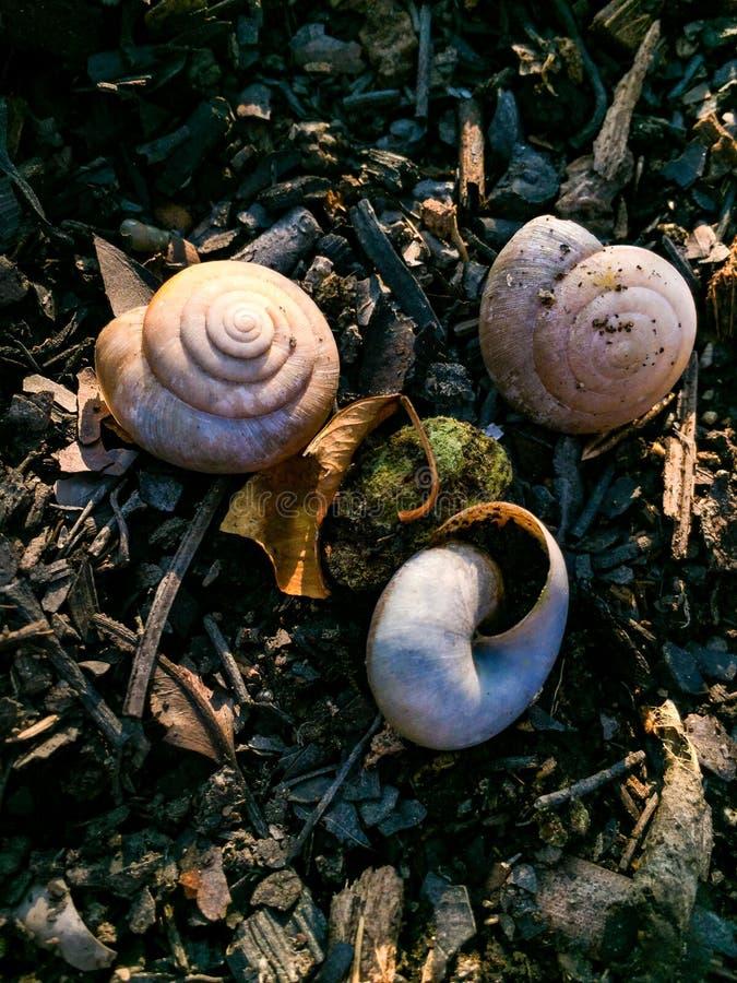 Os três escudos do caracol e uma bola do musgo imagem de stock royalty free