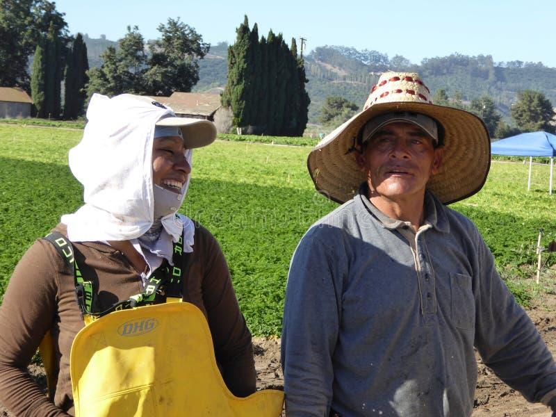 Os trabalhadores ao dia acoplam-se em campos de trabalho de Carpentria em Ventura County, Califórnia foto de stock
