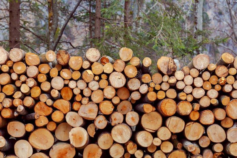 Os troncos das árvores abatidas na floresta imagens de stock