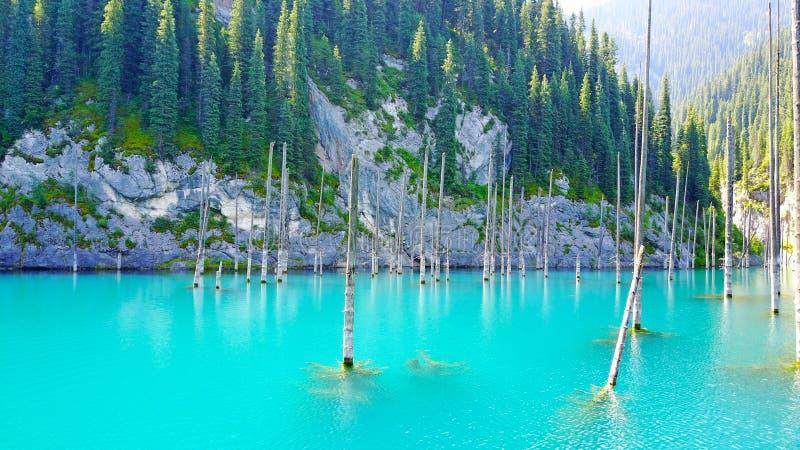 Os troncos de árvore conífera aumentam das profundidades de um lago da montanha com água azul fotografia de stock royalty free