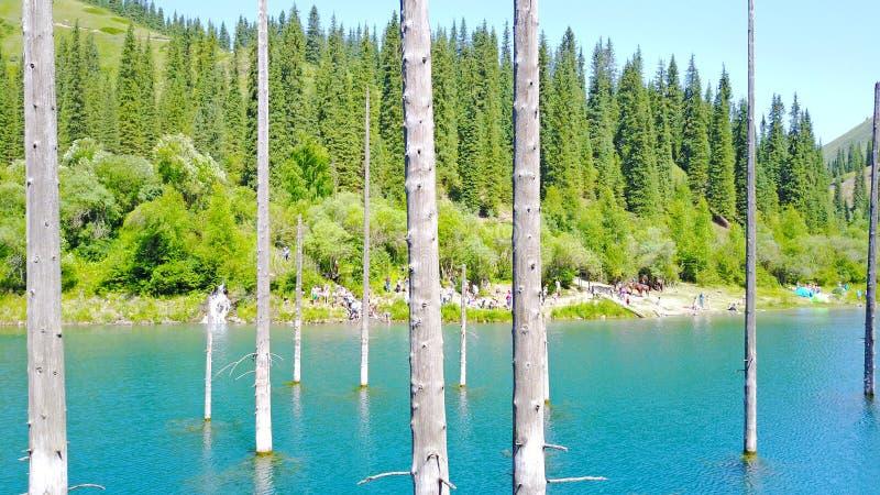 Os troncos de árvore conífera aumentam das profundidades de um lago da montanha com água azul fotos de stock