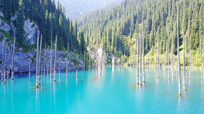 Os troncos de árvore conífera aumentam das profundidades de um lago da montanha com água azul imagens de stock