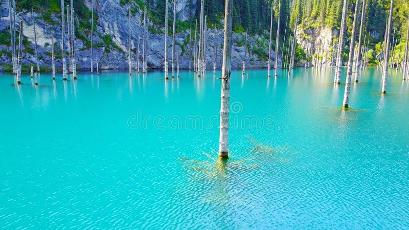 Os troncos de árvore conífera aumentam das profundidades de um lago da montanha com água azul foto de stock royalty free
