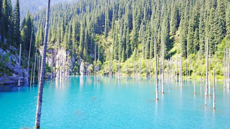Os troncos de árvore conífera aumentam das profundidades de um lago da montanha com água azul imagem de stock royalty free