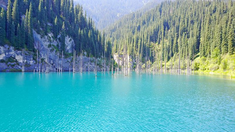 Os troncos de árvore conífera aumentam das profundidades de um lago da montanha com água azul imagens de stock royalty free
