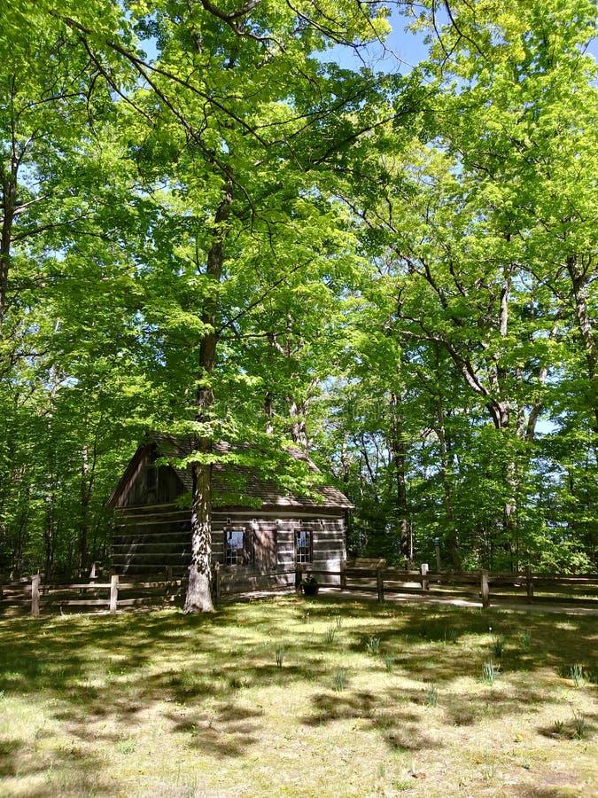 Os troncos nortes da cabine saem de ramos de árvore das madeiras da floresta foto de stock