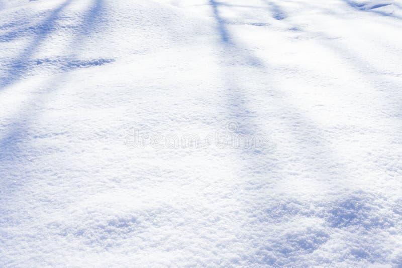 Os tufos árticos cobertos de neve revelam um aspecto sensual foto de stock