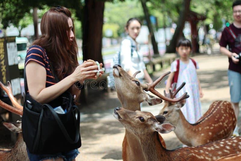 Os turistas apreciam as cookies com os cervos em sideway imagem de stock royalty free