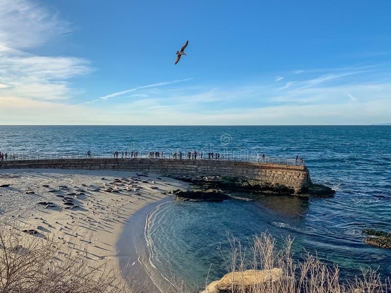 Os turistas e as gaivotas olham leões de mar descansam na praia de La Jolla fotos de stock royalty free