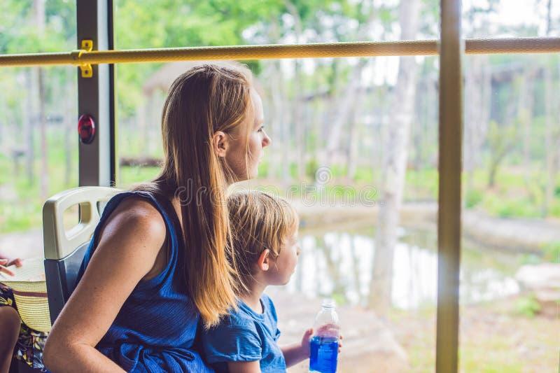 Os turistas olham os animais do ônibus no parque do safari imagem de stock royalty free