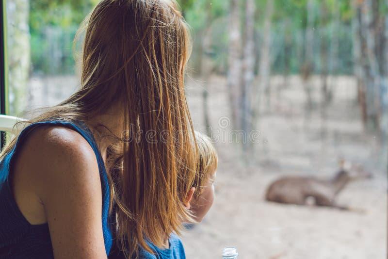 Os turistas olham os animais do ônibus no parque do safari fotografia de stock royalty free